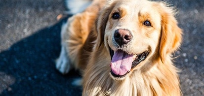 Family First Aid (including your dog!)