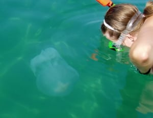 jellyfish in the sea water
