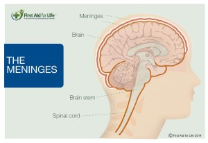 meninges First aid for Life