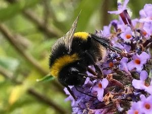 Top First Aid Tips for insect bites and stings