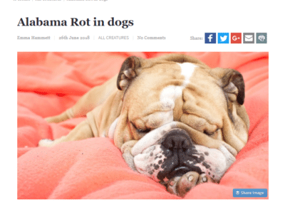 The Hippocratic Post – Alabama Rot