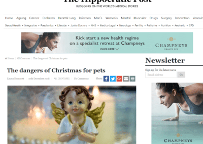 The dangers of Christmas for pets – The Hippocratic Post