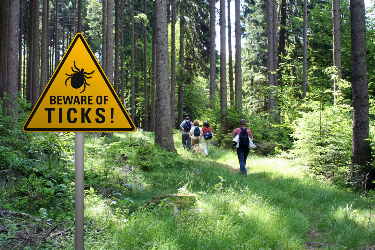 Ticks and the danger of Lyme disease for you and your dog